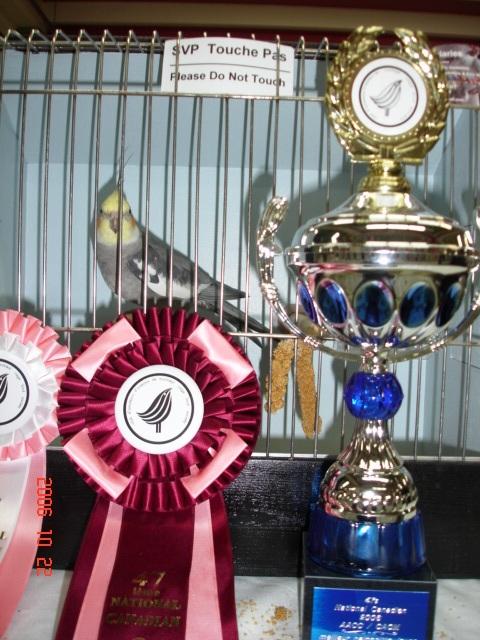 Best Cockatiel in Show, Best Adult Cockatiel, 2nd Best Adult, ...